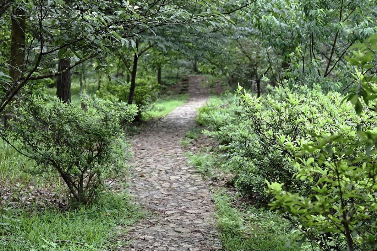 933.path