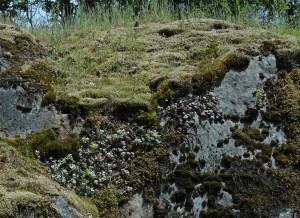 flowers on rocks