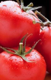 Solanum Fake