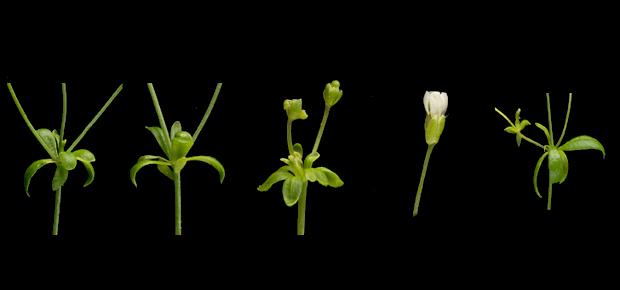 SCIENTISTS EXPLAIN ZOMBIE PLANTS