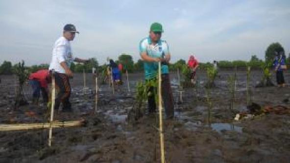 Wakil Walikota Langsa Drs H Marzuki Hamid,MM bersama dengan ASN dan pihak terkait peduli lingkungan terlihat penuh semangat melakukan penghijauan kembali lahan bakau di Desa Kuala Langsa. (Foto : Boy