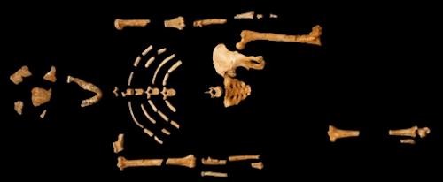 esqueleto-lucy