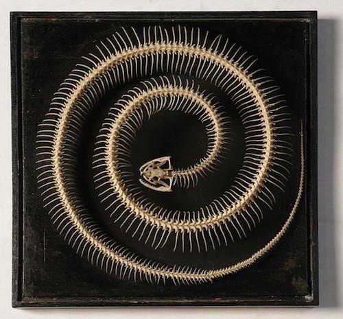 2.Esqueleto_de_serpiente