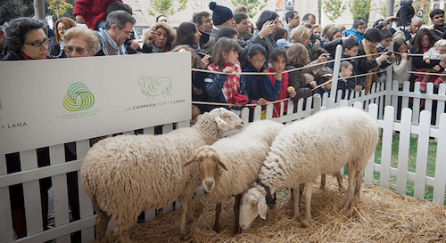 ovejas-semana-lana-2013