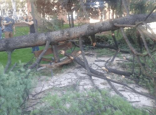 Caída de un pino del Retiro el 20 de julio - Zonaretiro.com