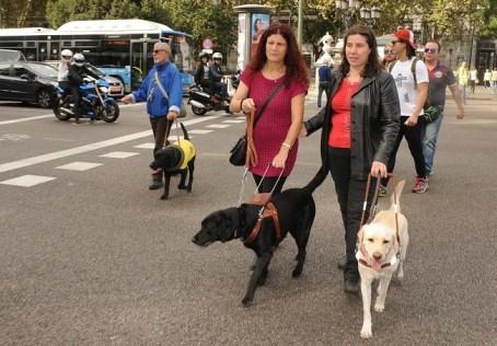 perros-invidentes-retiro-3