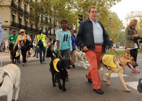 perros-invidentes-retiro-5