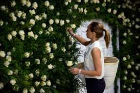 Rosas en el metro 2