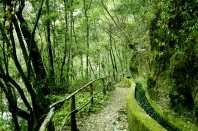 Foto del Bosque de Los Tilos. Autor: Pilar Fernández