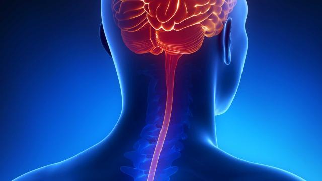 investiga que proceso solfa syllable inflamacion de las meninges
