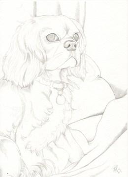 lottie sketch