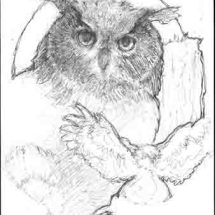 Small Owlwp