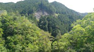 Shinrin yoku : les 10 bienfaits de la sylvothérapie