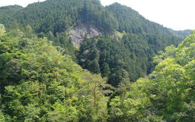 Shinrin-yoku ou sylvothérapie : les 10 grands bienfaits des bains de forêt pour le bien-être