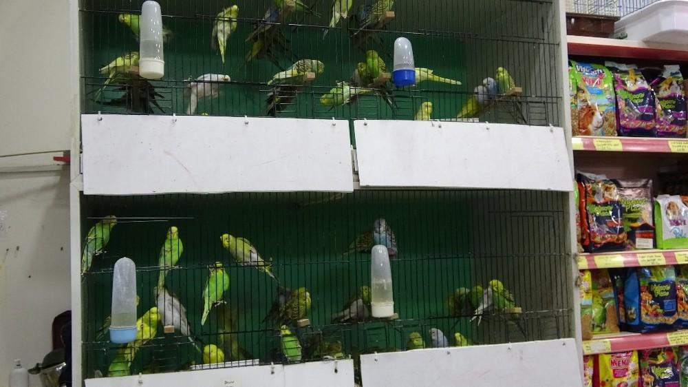 Pandemi evcil hayvan talebini artırdı