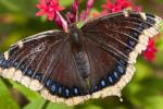 butterfly minnesota zoo