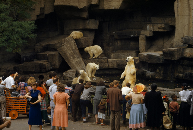 brookfield-polar-exhibit-1953