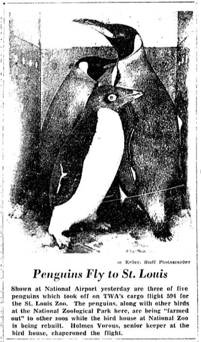 SNZ-penguins-to-STL