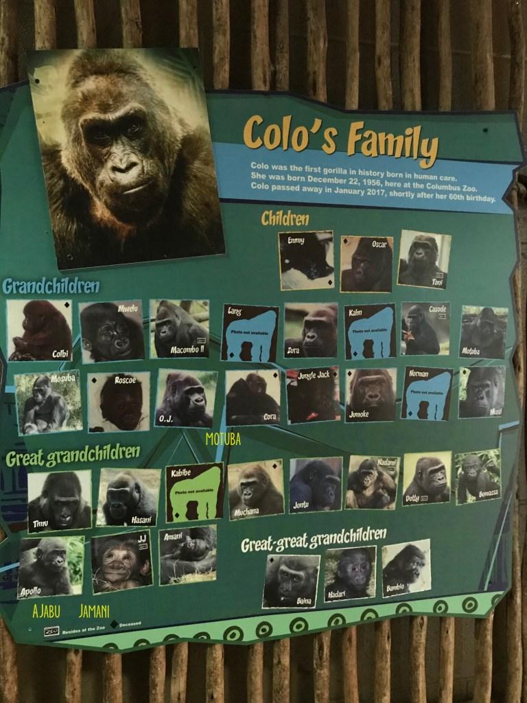 Colo's family tree