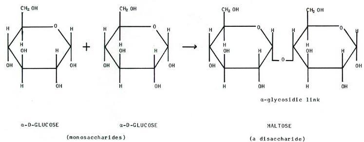 NCERT CBSE Standard 12 Biomolecules Chapter 14 Organic