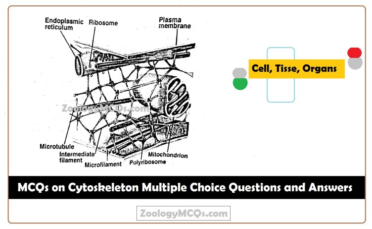 MCQs on Cytoskeleton Multiple Choice Questions and Answers