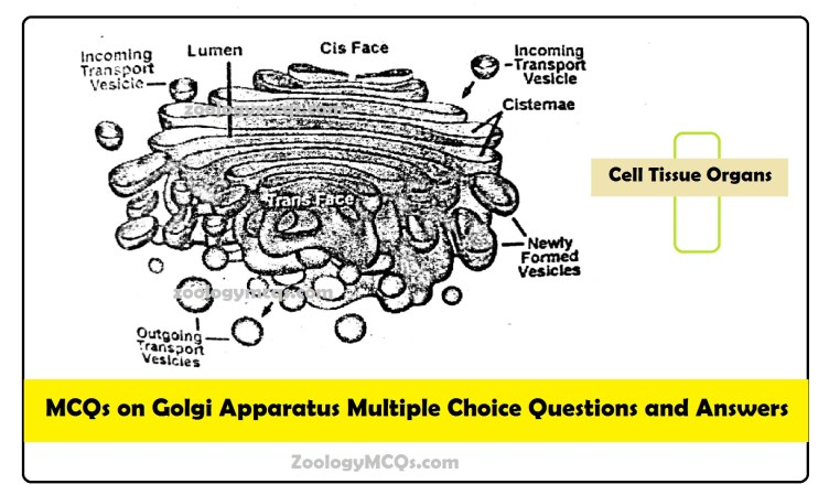 MCQs on Golgi Apparatus Multiple Choice Questions and Answers