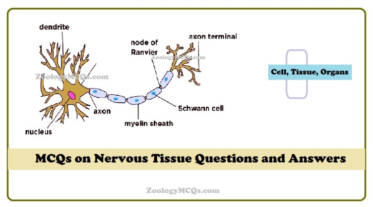 MCQs on Nervous Tissue Questions and Answers