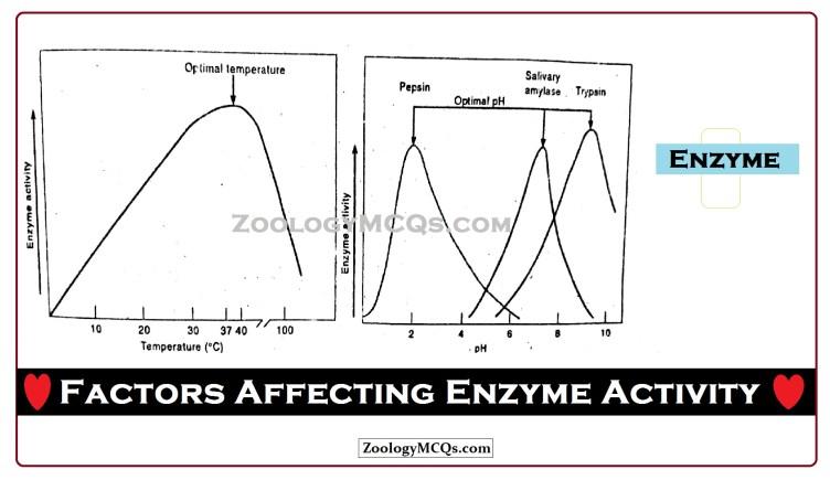 Factors Affecting Enzyme Activity MCQs