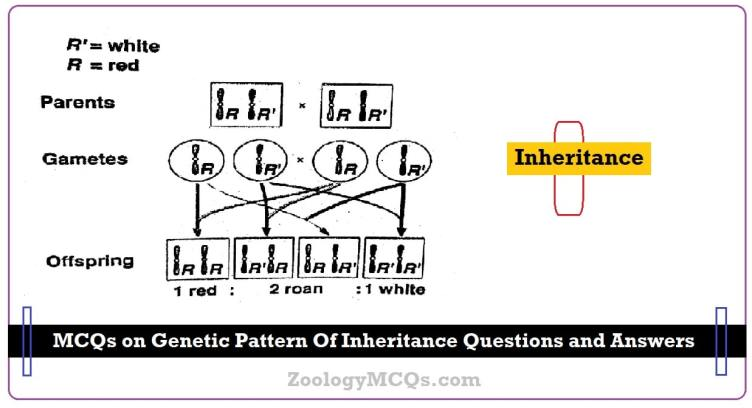 MCQs on Genetic Pattern Of Inheritance Questions and Answers