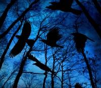 #BookReview of Ravens Gathering by Graeme Cumming @GraemeCumming63 #Lovebooksgrouptours  #RavensGathering