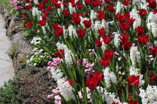 tulips, hyacinths, daisies