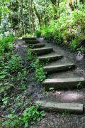 Trail steps
