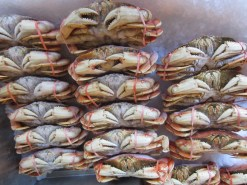 Dungeness crab, Pike Place Market