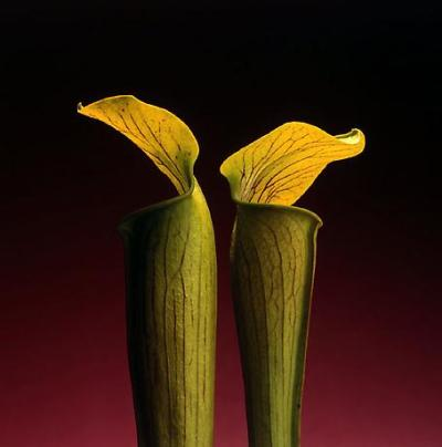 double jack in the pulpit 1988