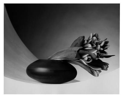 tulips 1987