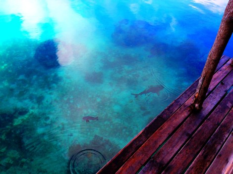 Solomon Islands: Living in the aquarium   Zooming Way Out