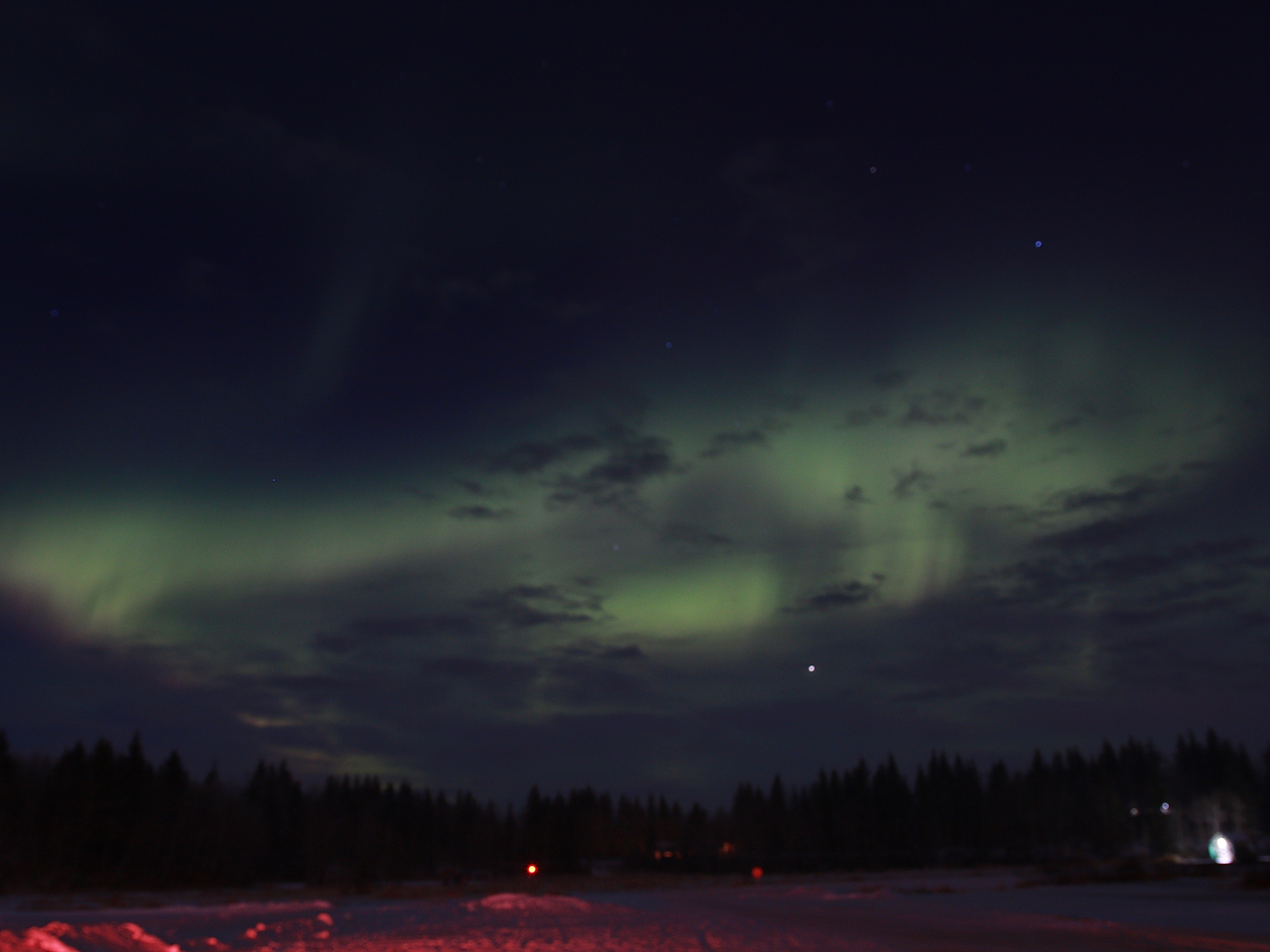 Aurora Borealis And Bison At Elk Island National Park