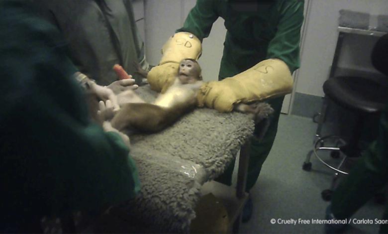 pacma-y-otras-entidades-animalistas-presentan-una-querella-criminal-contra-el-laboratorio-vivotecnia