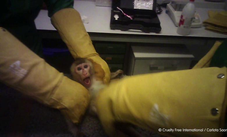 convocan-una-protesta-y-un-corte-del-trafico-este-lunes-para-que-requisen-a-los-animales-del-laboratorio-vivotecnia