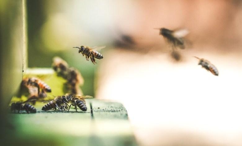 la-fascinante-historia-sobre-como-descubrimos-que-las-abejas-perciben-el-tiempo