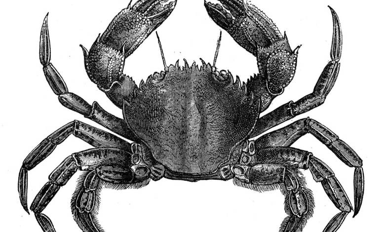 los-'karkinos'-de-hipocrates-o-por-que-asociamos-el-cancer-a-un-crustaceo