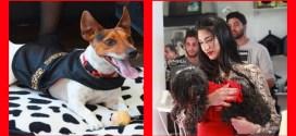 افتتاح أول صالون خاص بحلاقة وتجميل الحيوانات !