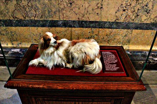 vienna nature science museum Maria Theresa puppy
