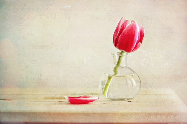 still with a tulip in a vase