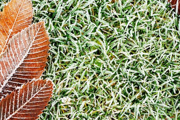 How To Take Proper Care Of Your Lawn In Winter Useful