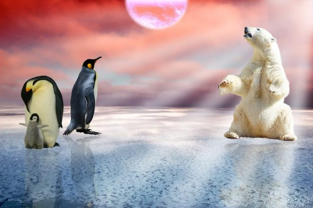 do polar bear eat penguins