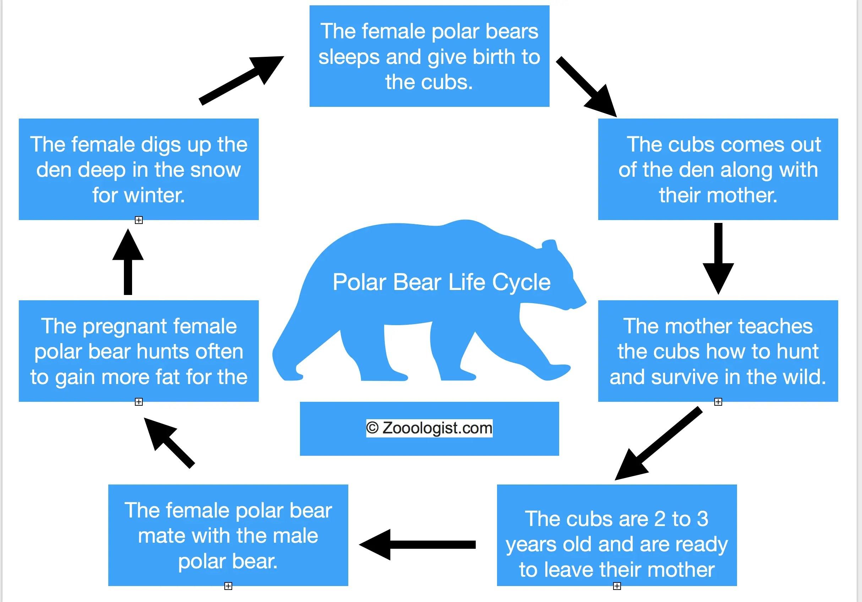 polar bear diagram 700r4 4th gear lockup wiring diagrams old cars car blueprints