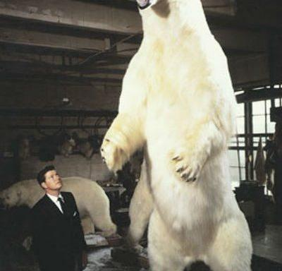 Biggest polar bear - Tallest Polar Bear - Largest Polar Bear
