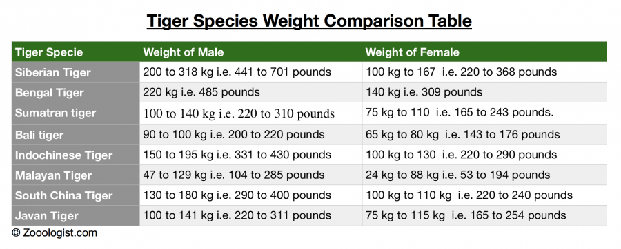 How Much Does a Tiger Weigh - Tiger Weight Comparison Chart