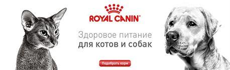 Лечебный влажный корм для кошек при болезнях почек Royal Canin RENAL FELINE WET С ГОВЯДИНОЙ